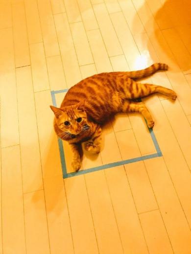 猫 四角 箱 認識