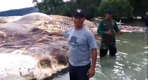インドネシア 謎 巨大生物 イカ クジラ