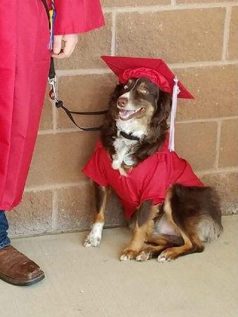 卒業式のシナトラ