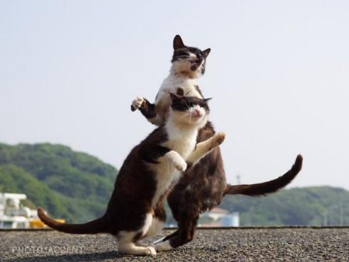 のら 猫 スタンド使い ジョジョ