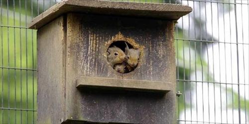井の頭自然文化園ニホンリス
