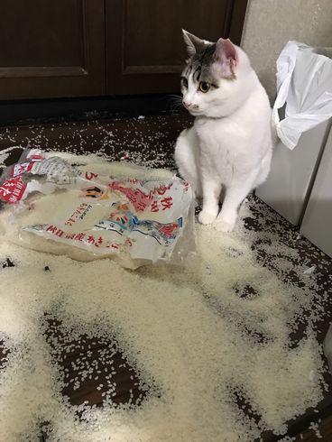 ニャンサムウェア ネコ 猫 被害