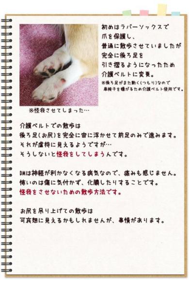 犬 変性性脊髄症 闘病 介護ベルト