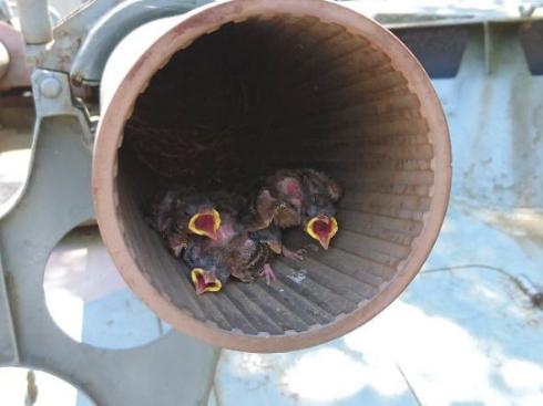 戦車 鳥 雛