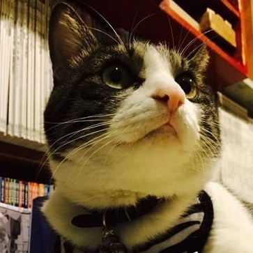 猫のいる本屋キャッツ・ミャウ・ブックス