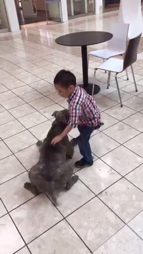 殺処分寸前から警察犬になったピットブル