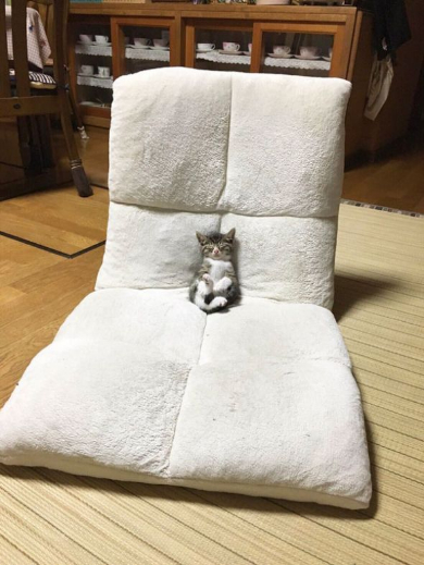 子猫 座椅子 テレビ 眠る