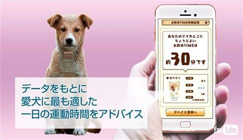 タカラトミーが犬用ウェアラブルデバイスを発表 1万頭以上のデータを駆使、ついでに飼い主のカロリー計算も
