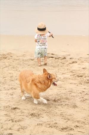 コギとボクのLA Life ドッグビーチ