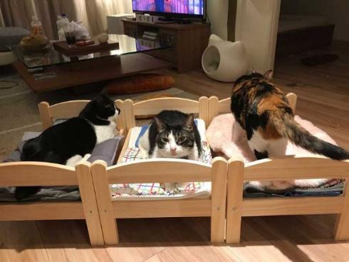 猫 合宿 IKEA ベッド