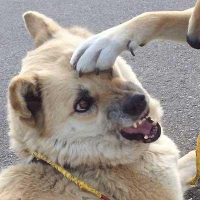 犬 仲良くない人 頭ぽんぽん 女子 顔 表情 気持ち