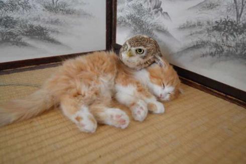 フクロウ 猫 モフ HUKULOU COFFEE