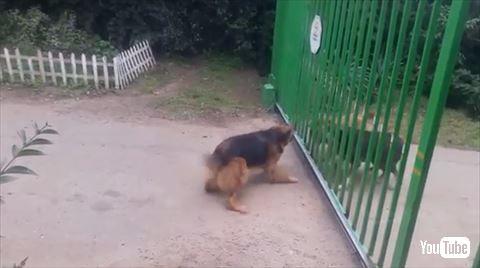 ほえあう犬たち