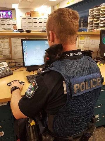警官と子猫