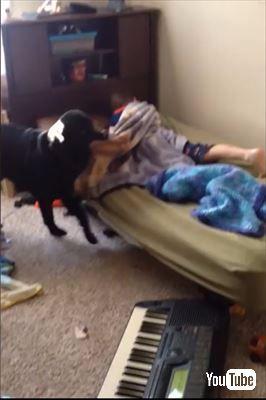 子どもを起こす犬
