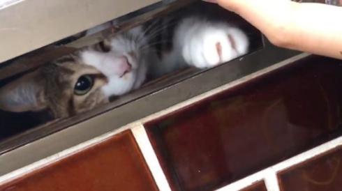 猫 郵便受け ポスト