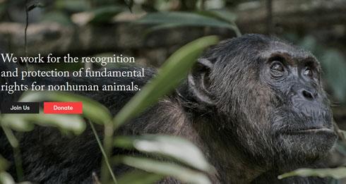 チンパンジーに人権を求めた裁判