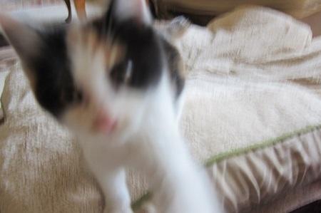 失敗した猫の写真