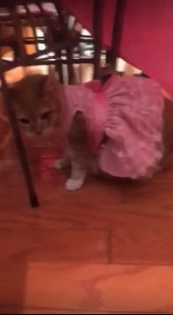 猫の誕生日パーティー