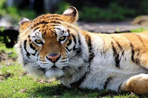トラとデートなう