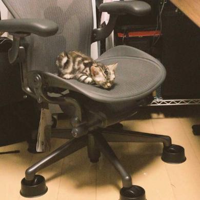Twitter 乗っ取り 犯行現場 猫
