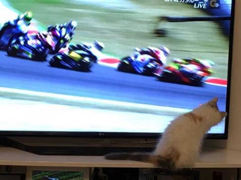コーニャリング 猫 バイク テレビ カーブ 曲がる