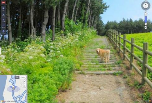 犬 ストリートビュー 韓国 ウルルン郡 Daum