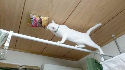 猫 スナック菓子 吊した結果