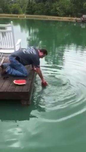 スイカで釣り