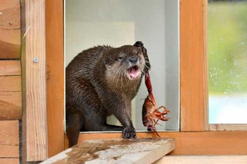 コツメカワウソ わらび ザリガニ 大森山動物園