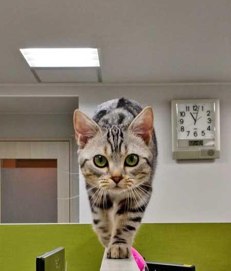 猫 部長 エインシャント パーテーション 職場