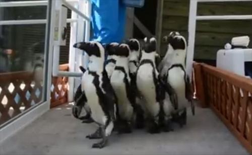 マリンワールド海の中道 ペンギン