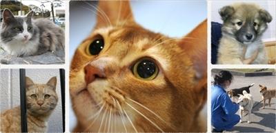 愛猫健康手帳