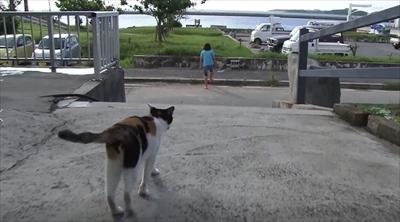 美ら猫 波照間島・黒島・小浜島編