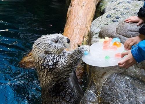 海遊館ラッコのパタ 誕生日