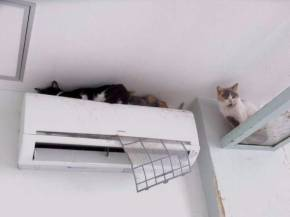猫カフェ 猫之坊 経営者 失踪