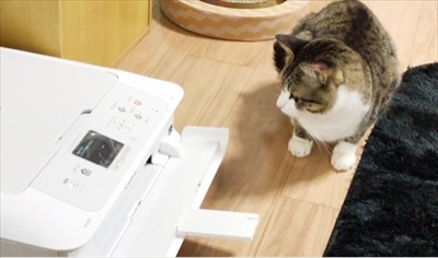 Amebaブログ 猫のすずめちゃん