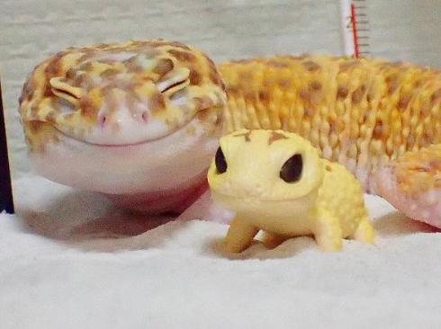 細目笑顔のヤモリ