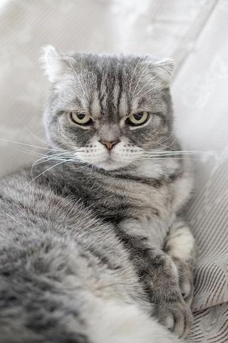 猫のお寺の知恩さん