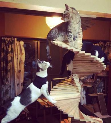 猫 螺旋 階段 DIY 父 自作