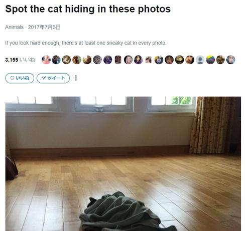 「Spot the cat(猫を見つけろ)」写真まとめ記事