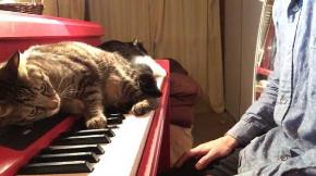 猫 キーボード 演奏 前衛的