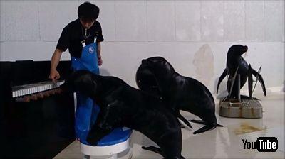 おたる水族館 オタリア