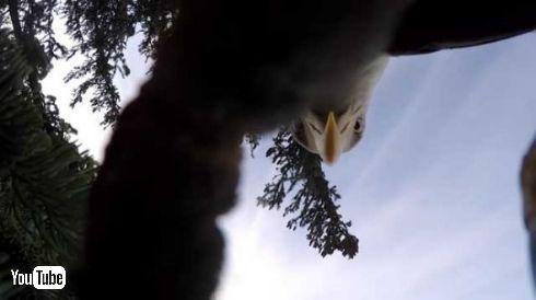 鷲 GoPro 空撮