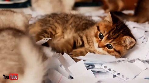 猫と紙吹雪