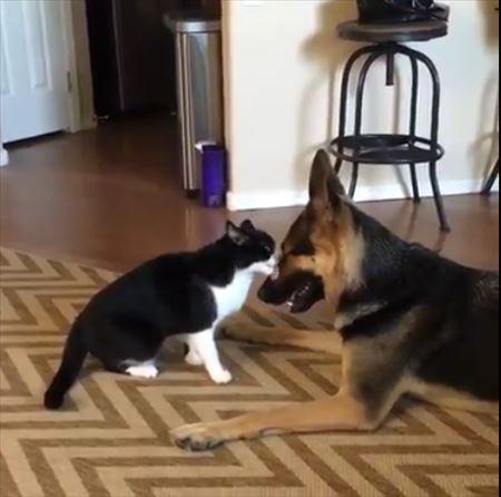 猫と犬のケンカ