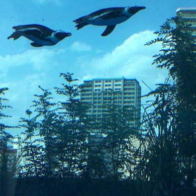 ペンギン 空を飛ぶ サンシャイン水族館 天空のペンギン