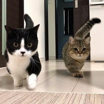 小鉄&トニオ