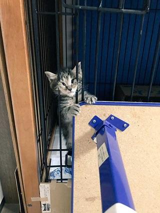 猫 イサム 子ども