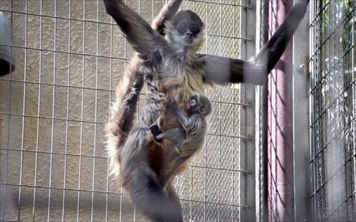 上野動物園・赤ちゃん誕生